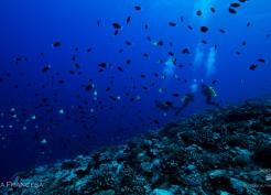 Mergulho na Polinesia Francesa